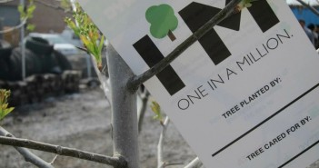 Free Tree via Gowanus Canal Conservancy